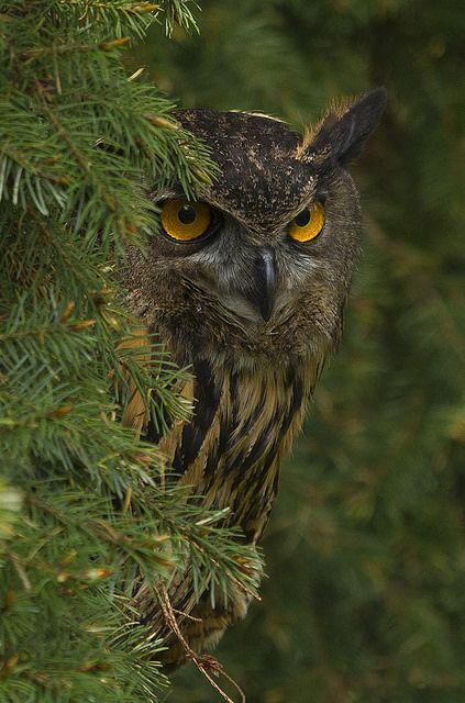 Виждам те