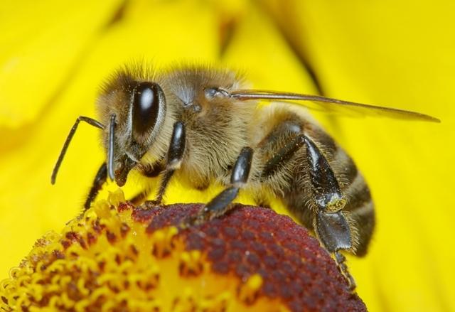 Ученици решаваха проблема с изчезването на пчелите